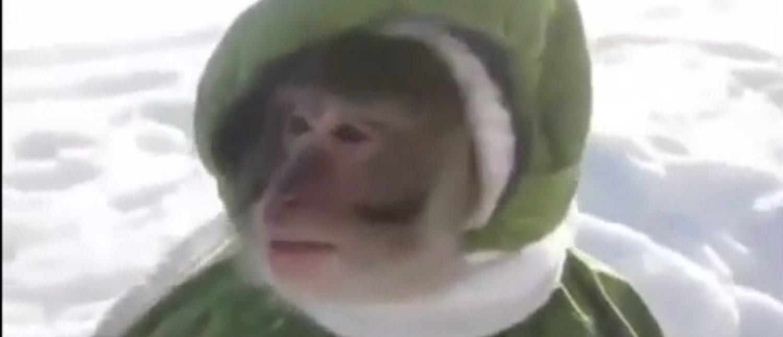 VIDEO: Opet malo majmuna u toploj vodi