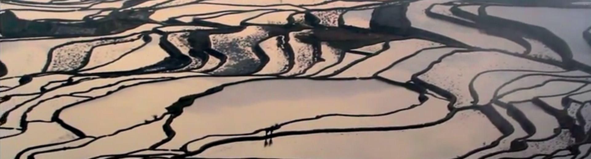 VIDEO: Pogledajte fantastična rižna polja u Juanjangu