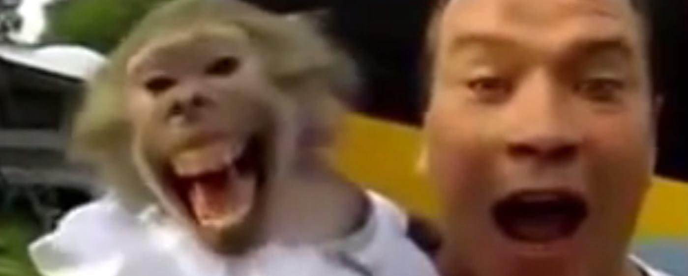VIDEO Još malo majmunarija za vas