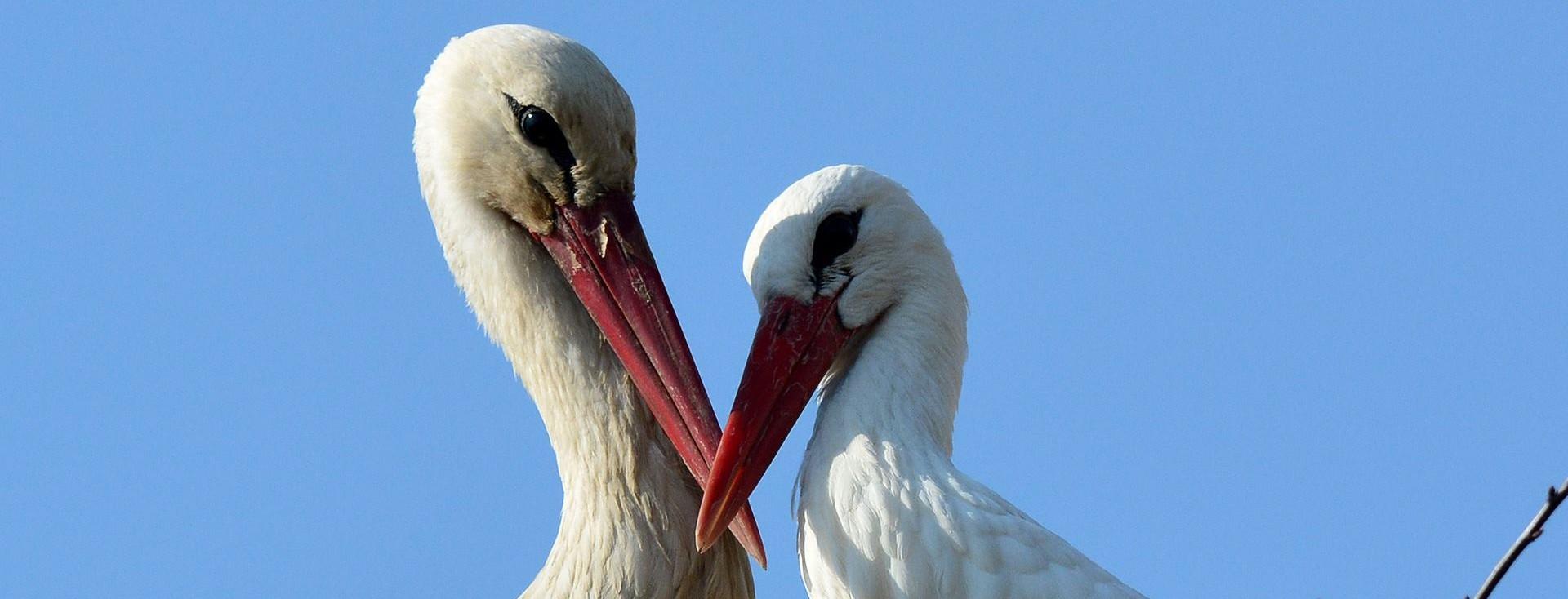 SVJETSKI DAN PTICA SELICA Apel na podizanje svijesti o zaštiti ptica