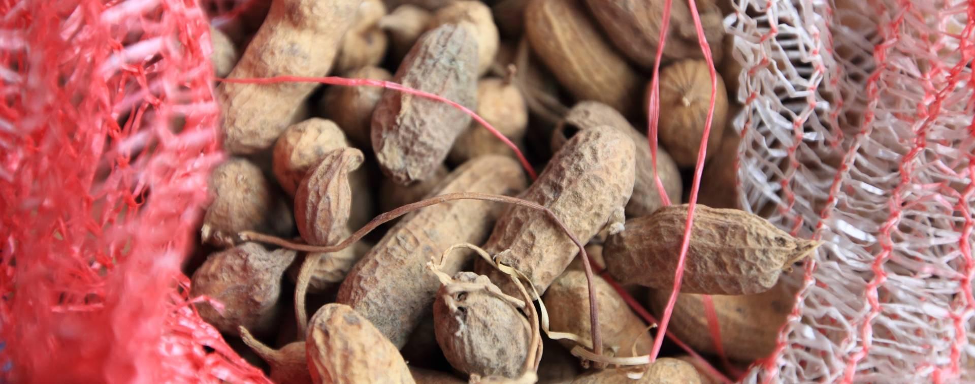 POLA ŠAKE DNEVNO: Orasi i kikiriki štite od prerane smrti