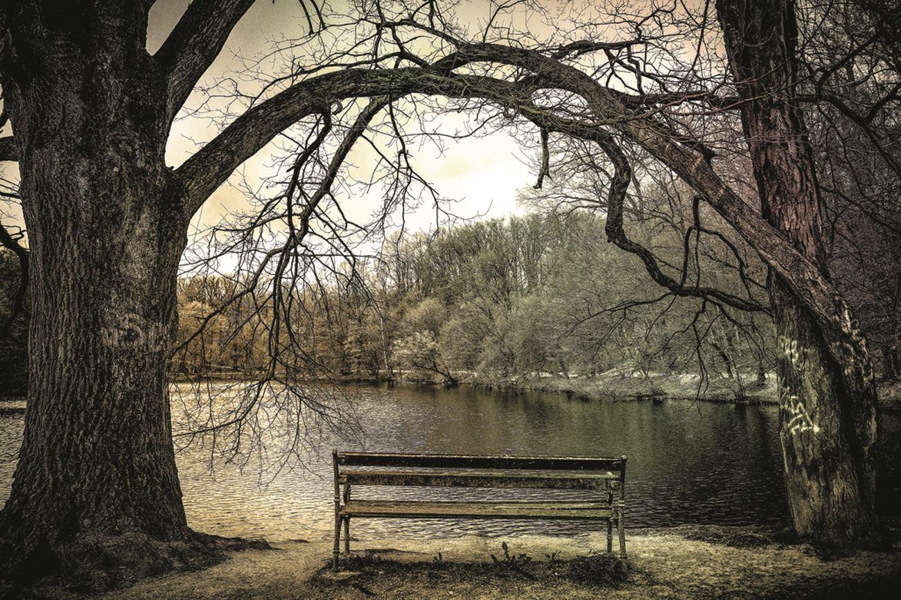 Zagrljeno drvece i klupa FOTO: Tomislav Cuveljak