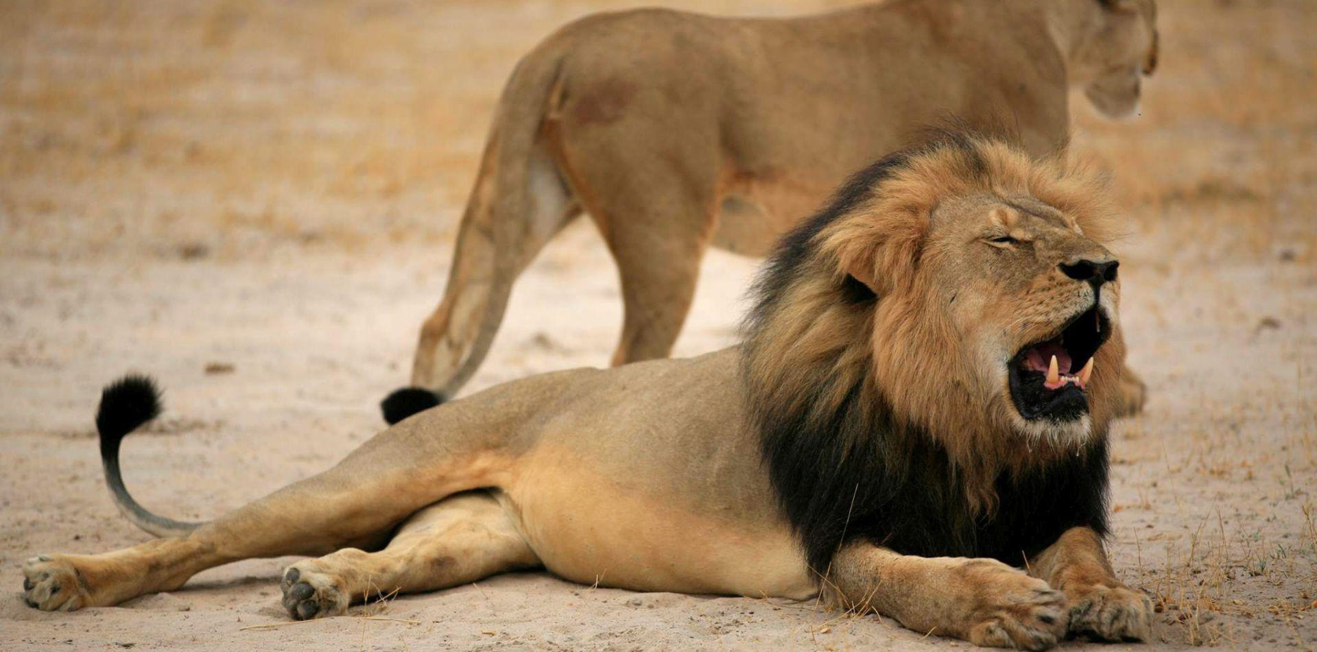 JAVNOST OGORČENA: Uz jamčevinu pušten organizator smrtonosne hajke na lava Cecila