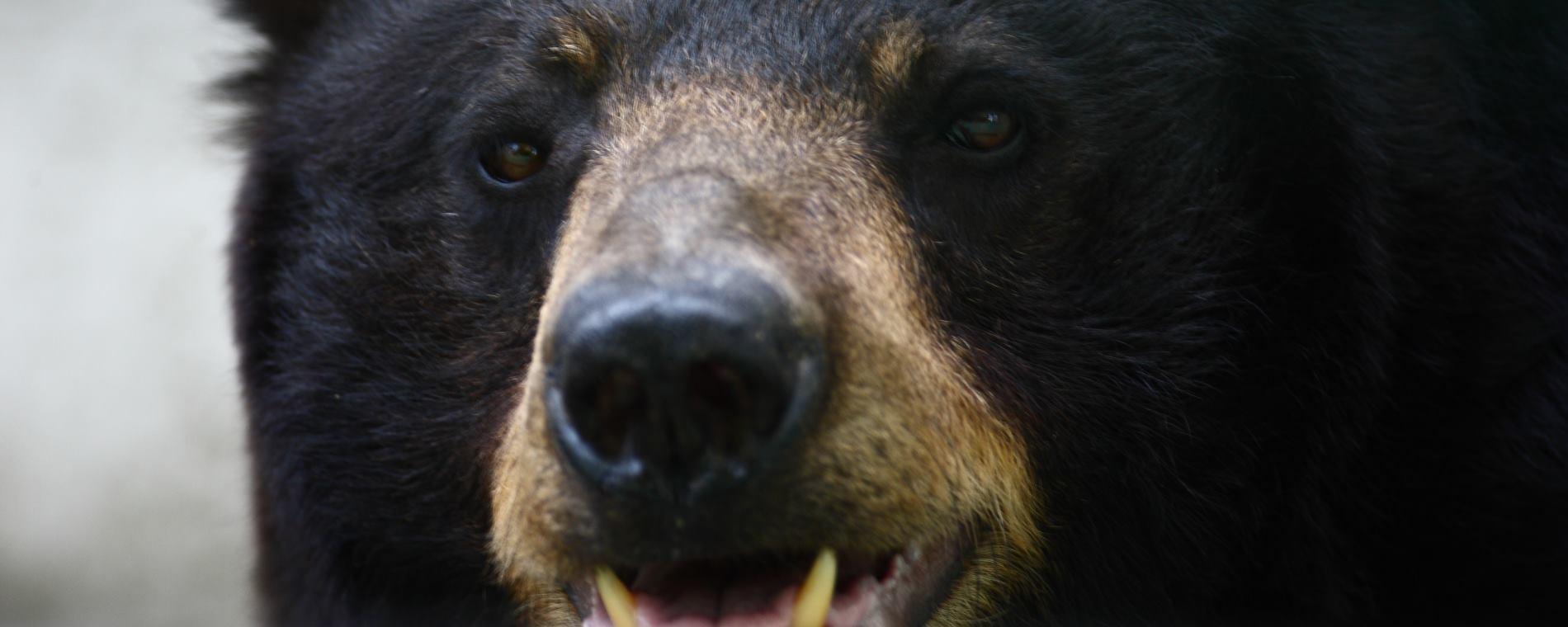 VIDEO: Medvjed nervozno lutao po ruskom trgovačkom centru