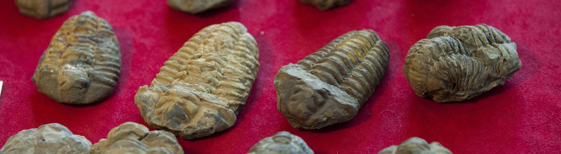 ZMIJA S ČETIRI NOGE U Brazilu otkriven jedinstveni fosil iz mezozoika