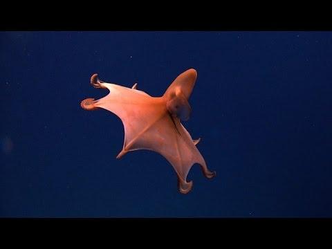 VIDEO: Zavirimo nakratko u morske dubine