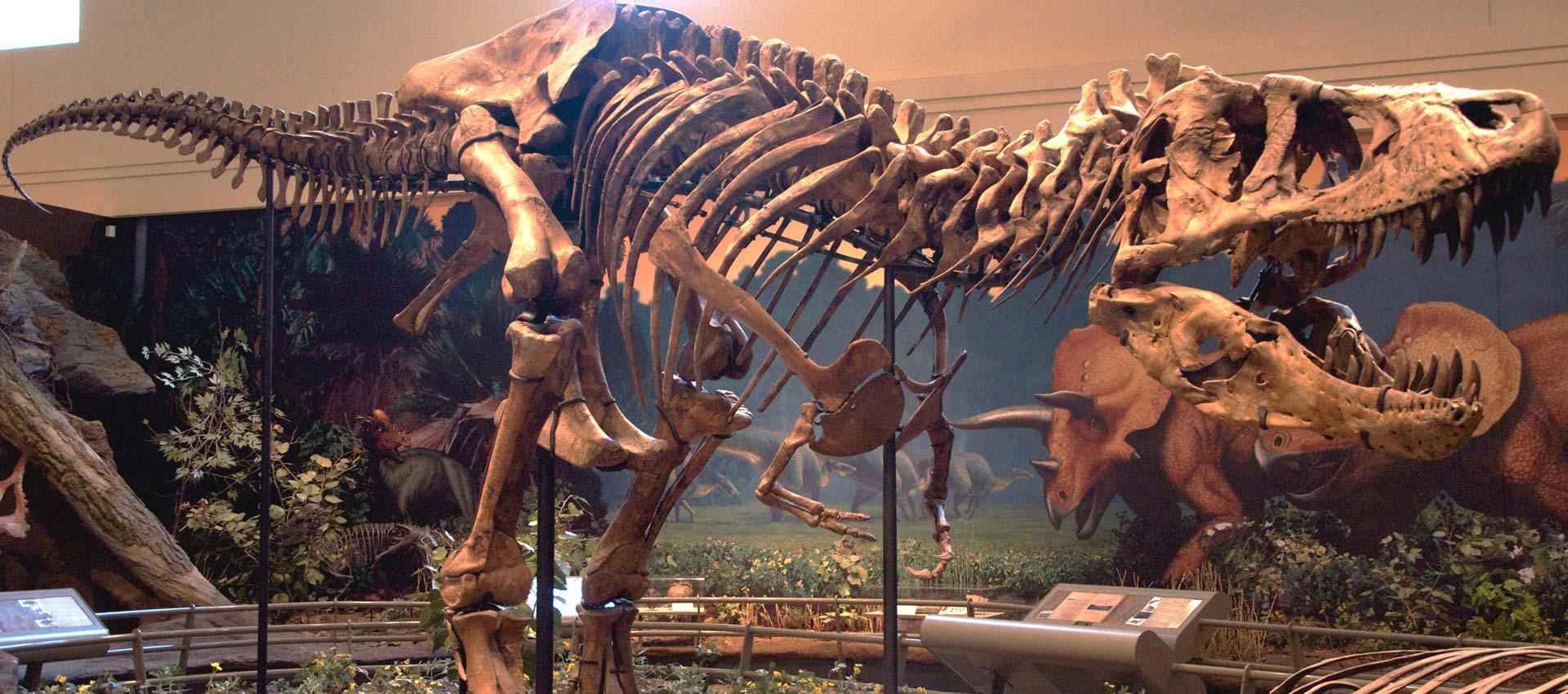 Pronađeni fosili najvećeg dinosaura u Japanu
