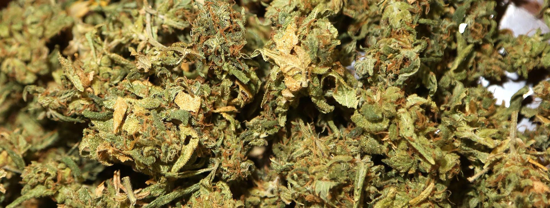NAJNOVIJE ISTRAŽIVANJE Oko 44 posto Amerikanaca probalo marihuanu