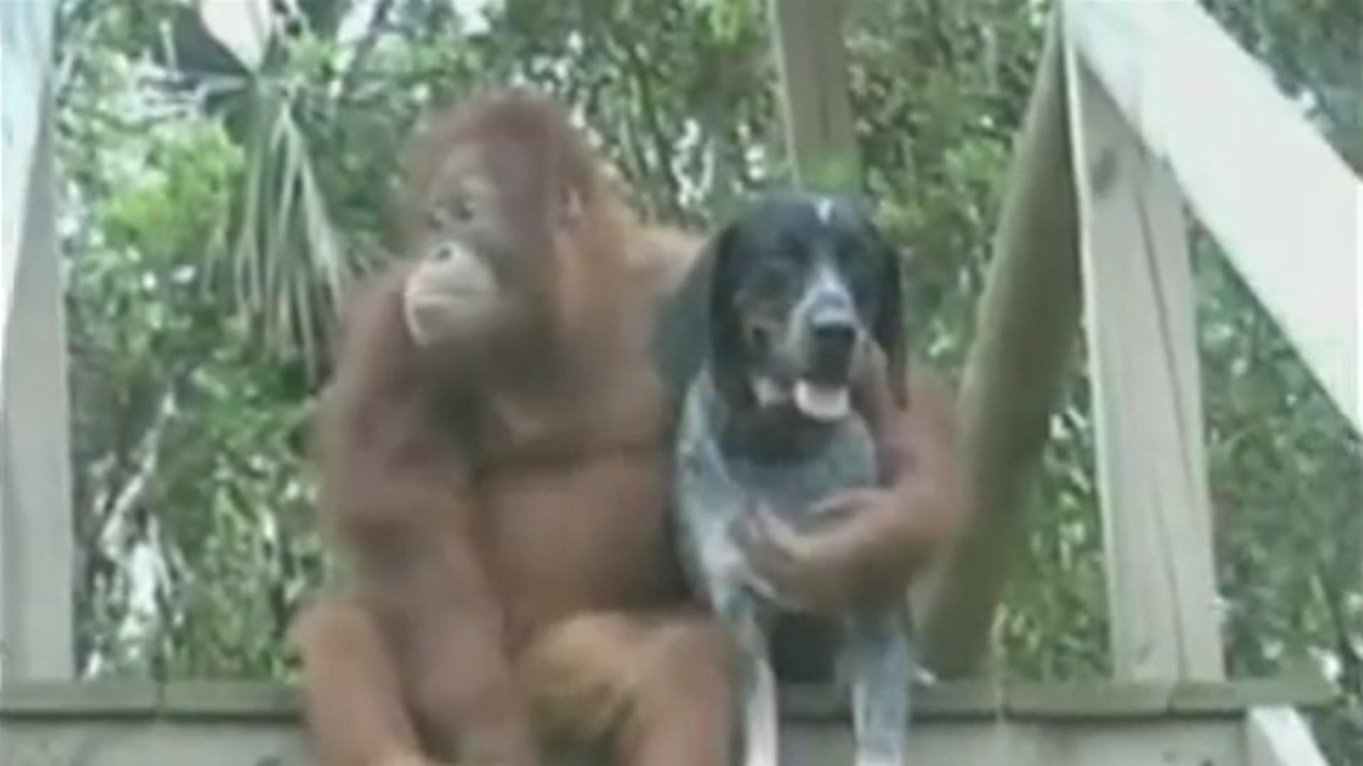 VIDEO: Nesvakidašnja ljubav među životinjama