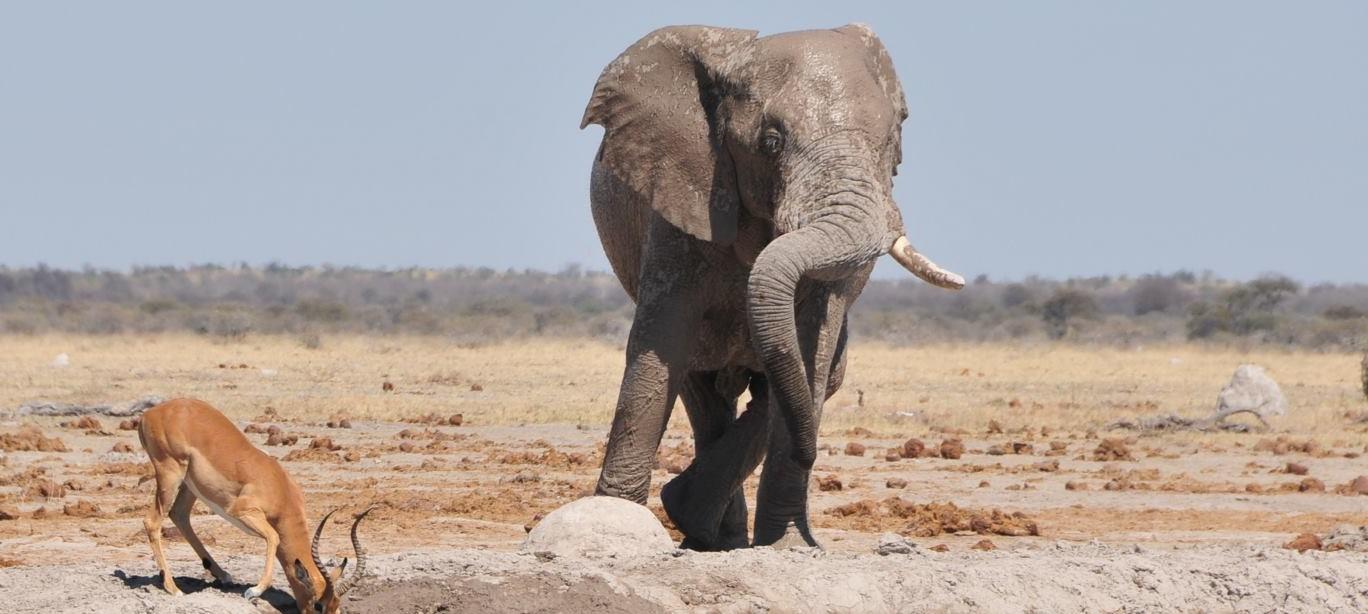DOBA SUŠE Životinje u Bocvani traže okrijepu u rupama s vodom