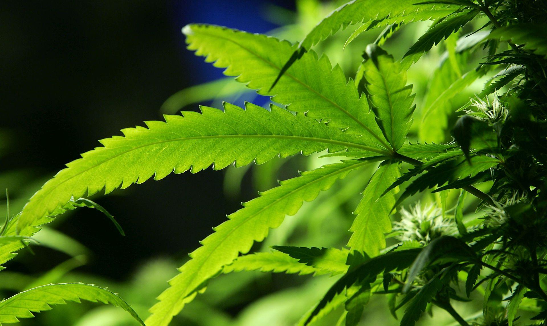 """""""O legalizaciji konoplje potrebna šira javna rasprava"""""""