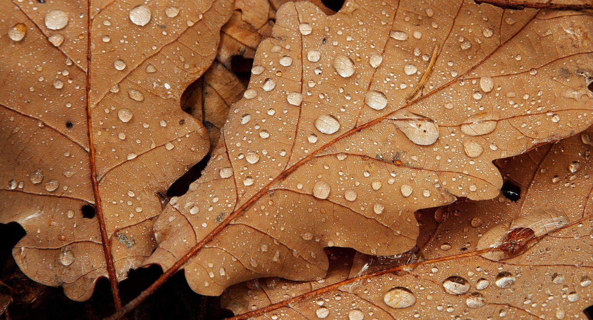 ACCUWEATHER Nakon rekordnog ljeta nastavak vrućina sve do studenog