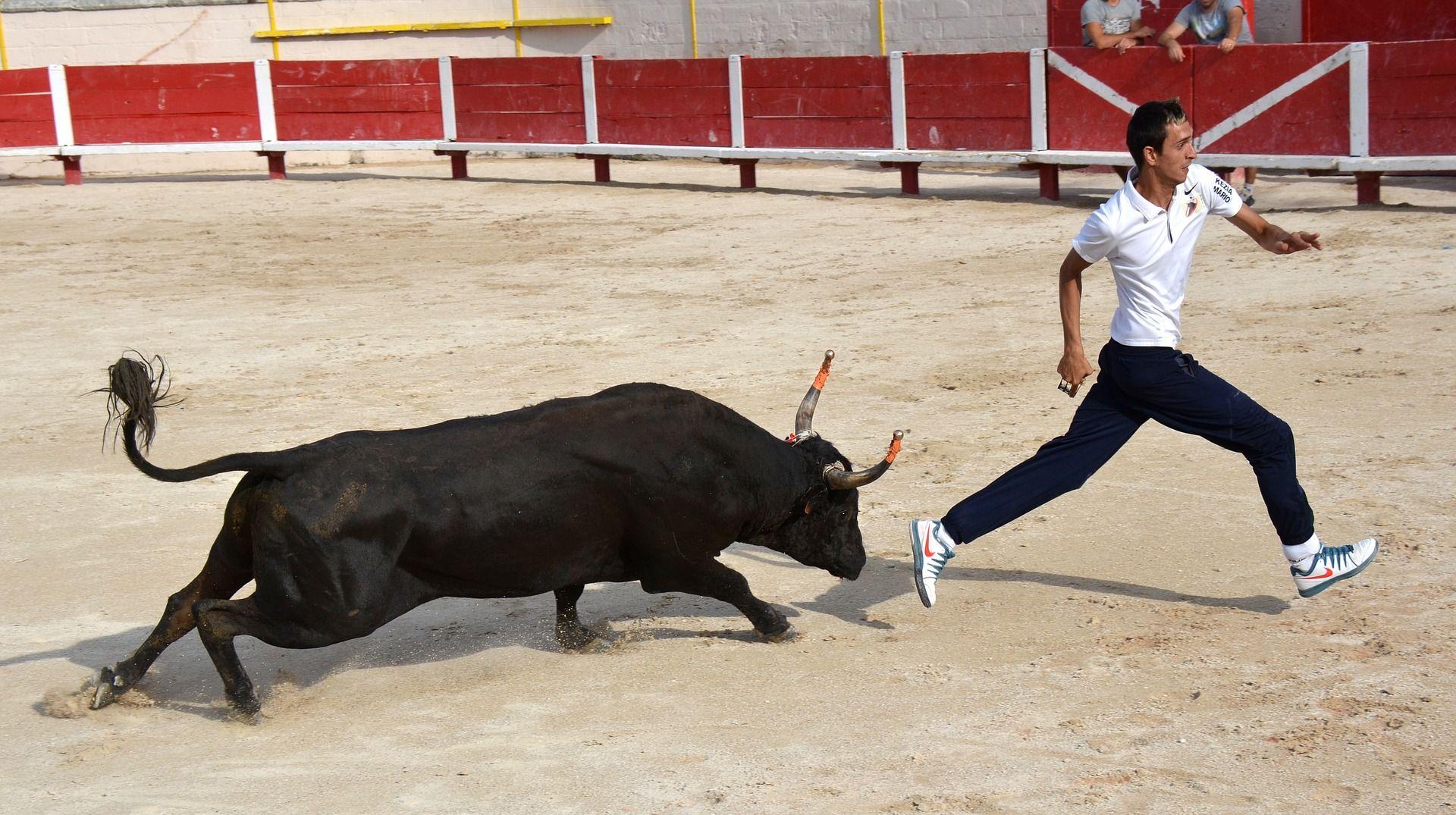 ŠPANJOLSKA Bikovi u srpnju usmrtili čak sedmero ljudi