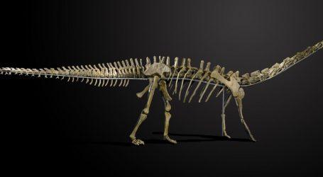 VIDEO: Kosti dinosaura mesoždera pronađene u Brazilu
