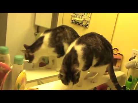 VIDEO: Mačak pokušava otkriti tajnu ogledala