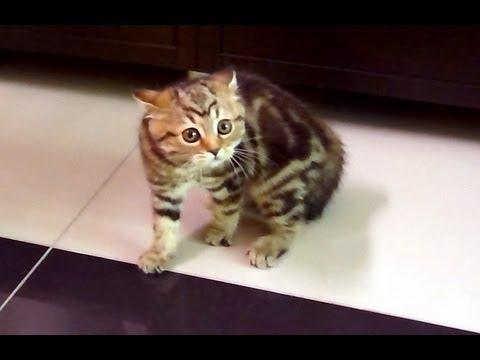 VIDEO: Ova mačkica obožava skliski pod…