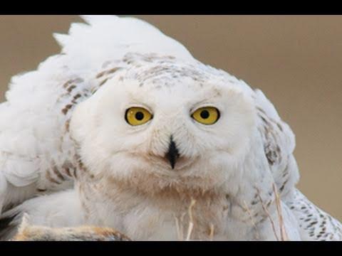 VIDEO: Dolazak ljeta i ptice u kanadskom arktičkom krugu