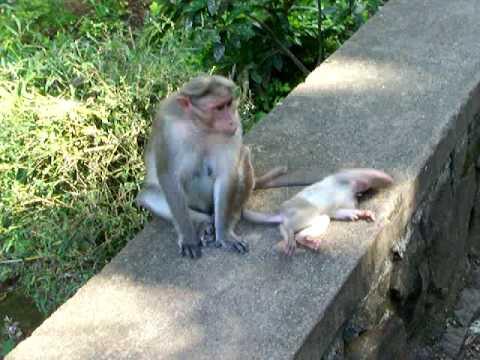 VIDEO: Siroti mladi majmun pod utjecajem flasha…