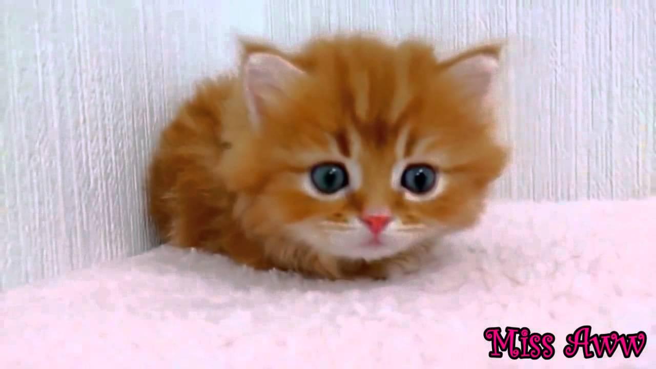 VIDEO: Mačići i njihovi životni problemi