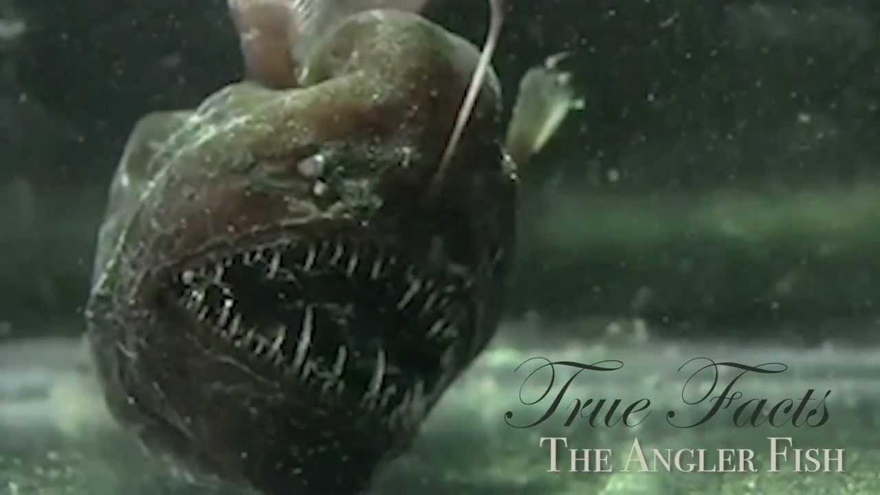 VIDEO: Ribe udičarke i život u morskim dubinama