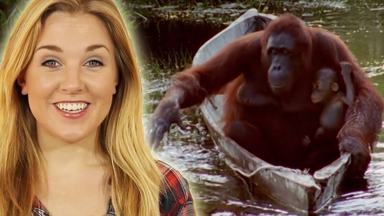 VIDEO: Pogledajte kako su snalažljive ove životinje…