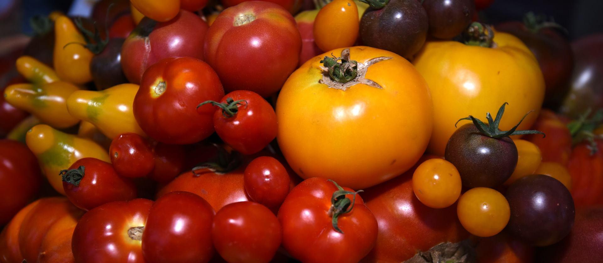 VIDEO: Čileanci održali tradicionalan sukob rajčicama