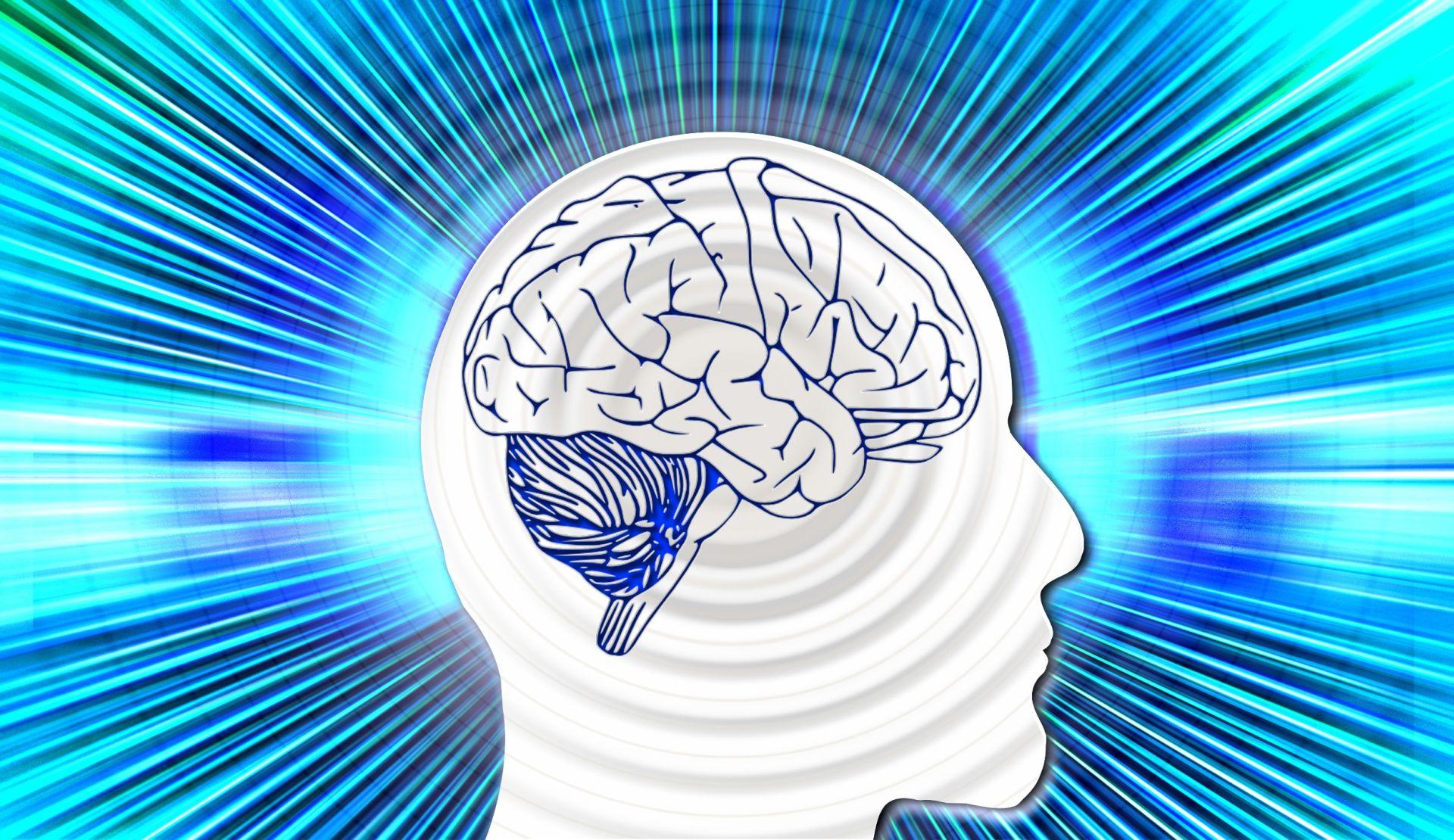 PRVI PUT U POVIJESTI Znanstvenici uzgojili mozak u laboratoriju