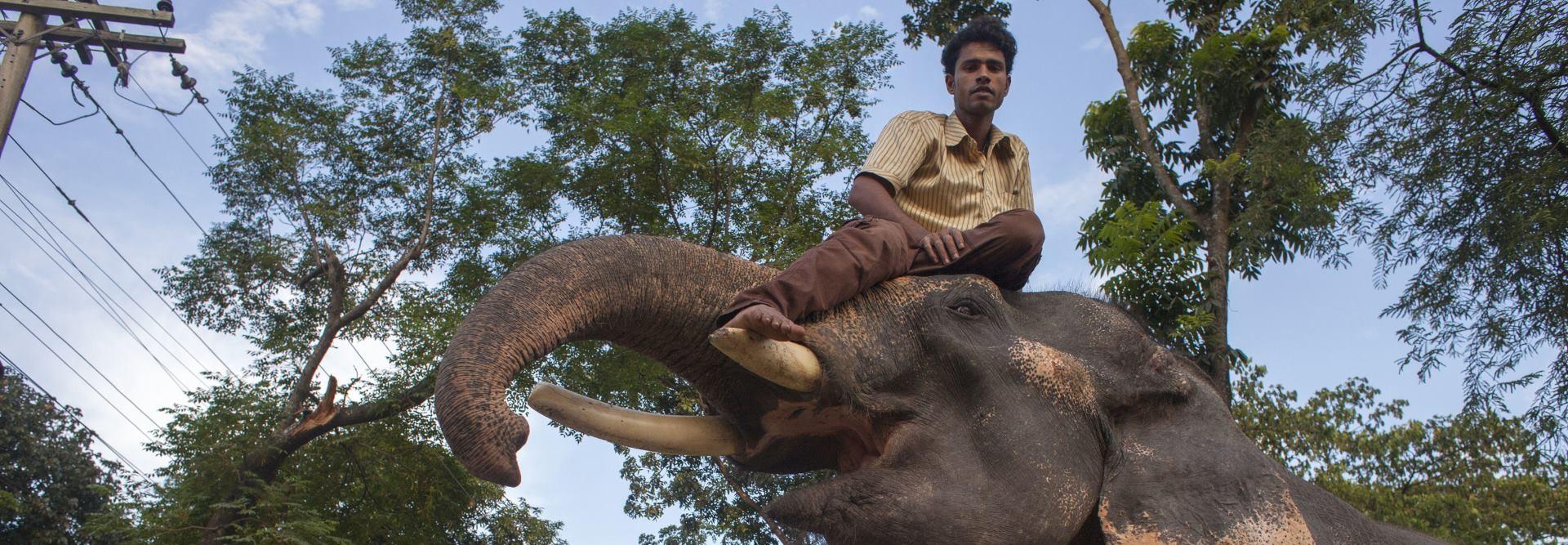 VIDEO: Obilježen Svjetski dan slonova