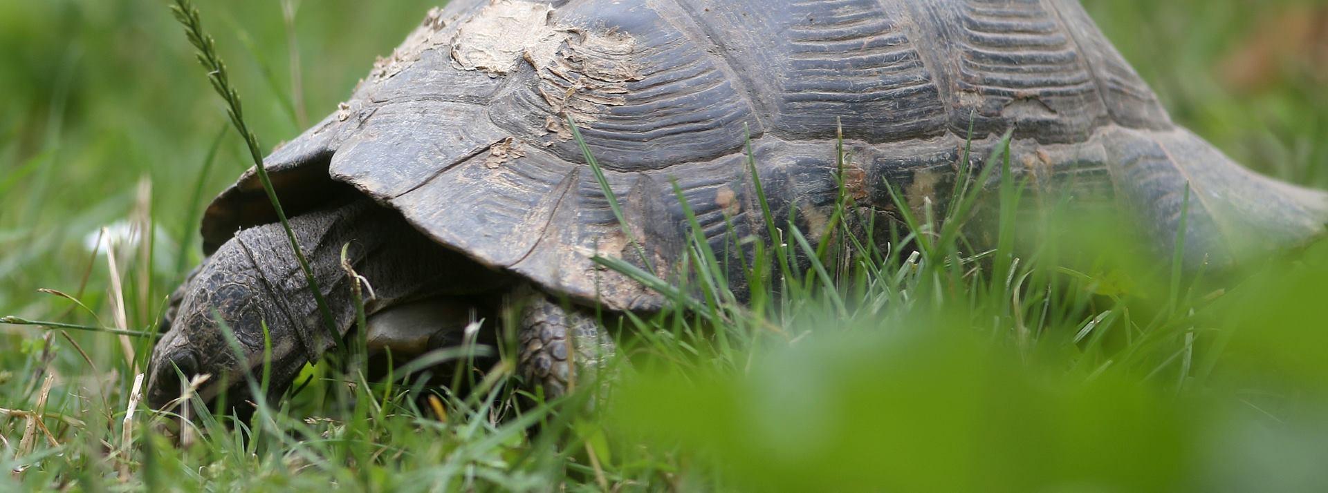 VIDEO: Najstariji pronađeni fosilni ostatak kornjače potječe iz perioda krede