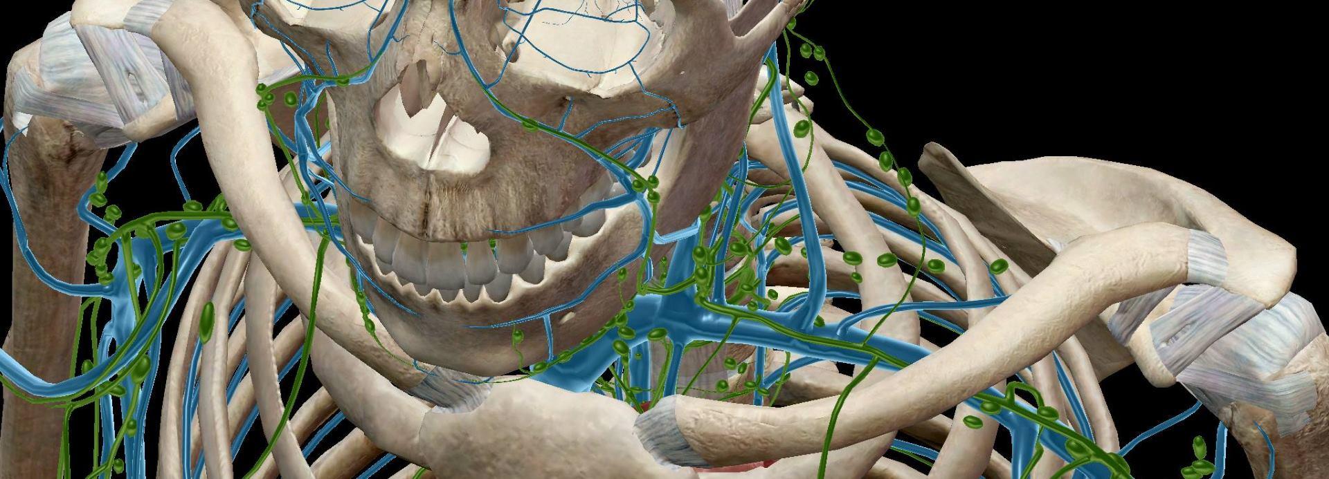 Spriječite osteoporozu prehranom, pravilnim sunčanjem i vježbom
