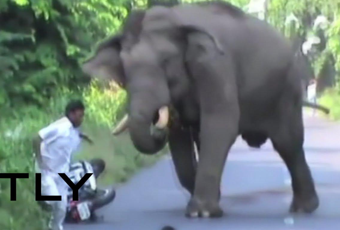 VIDEO: Indijci u parku Gorumara uživali dok iz šume nije izašao…