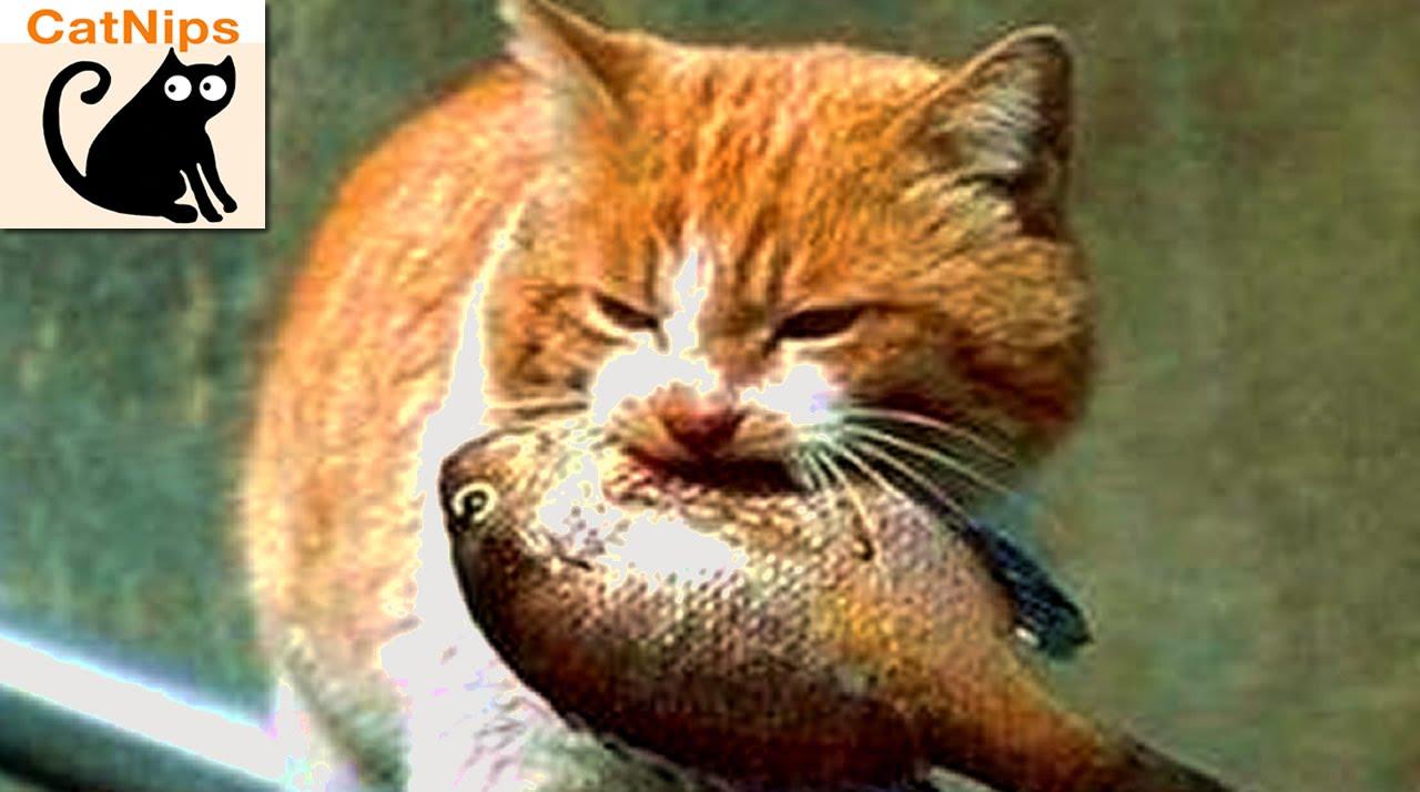 VIDEO: Mačka pokušava sakriti osušenu ribu