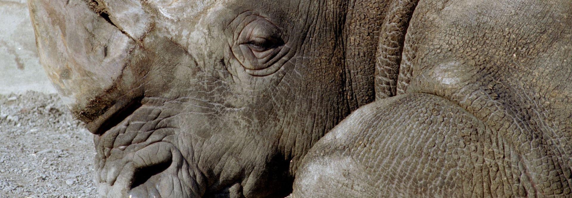 VIDEO: Danas se obilježava Svjetski dan nosoroga