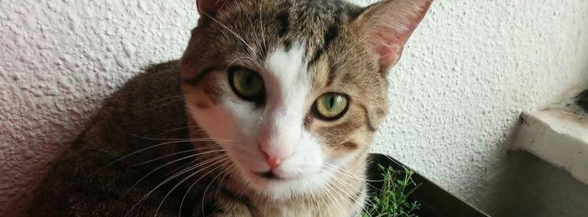 VIDEO: Mačak koji pije vodu iz wc-školjke