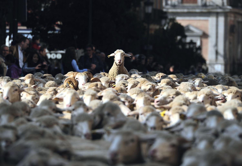 SLOVENIJA Vukovi poklali stado ovaca, vlasti smiruju ljude