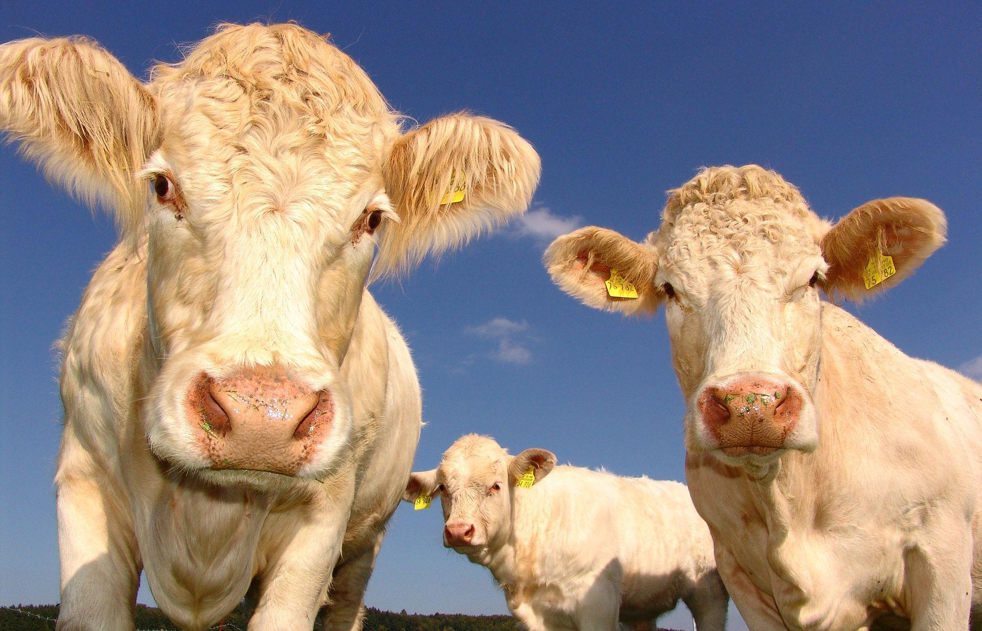 Kina gradi najveću tvornicu za kloniranje životinja
