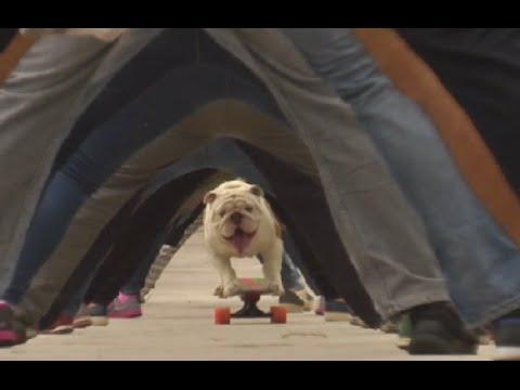 VIDEO: Buldog Otto oborio svjetski rekord na skateboardu