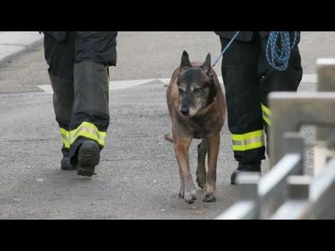 VIDEO: Ubijeni policijski pas postao 'heroj' na društvenim mrežama