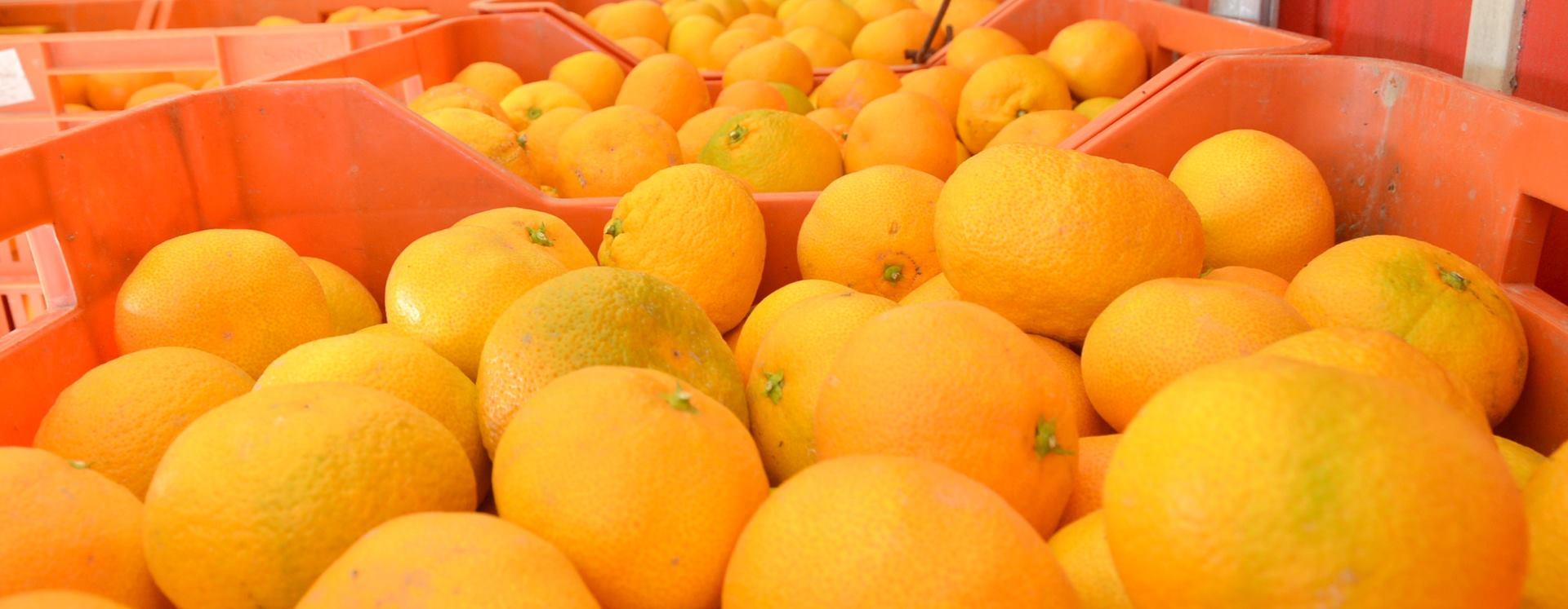 Jedite mandarine i pritom zdravo mršavite