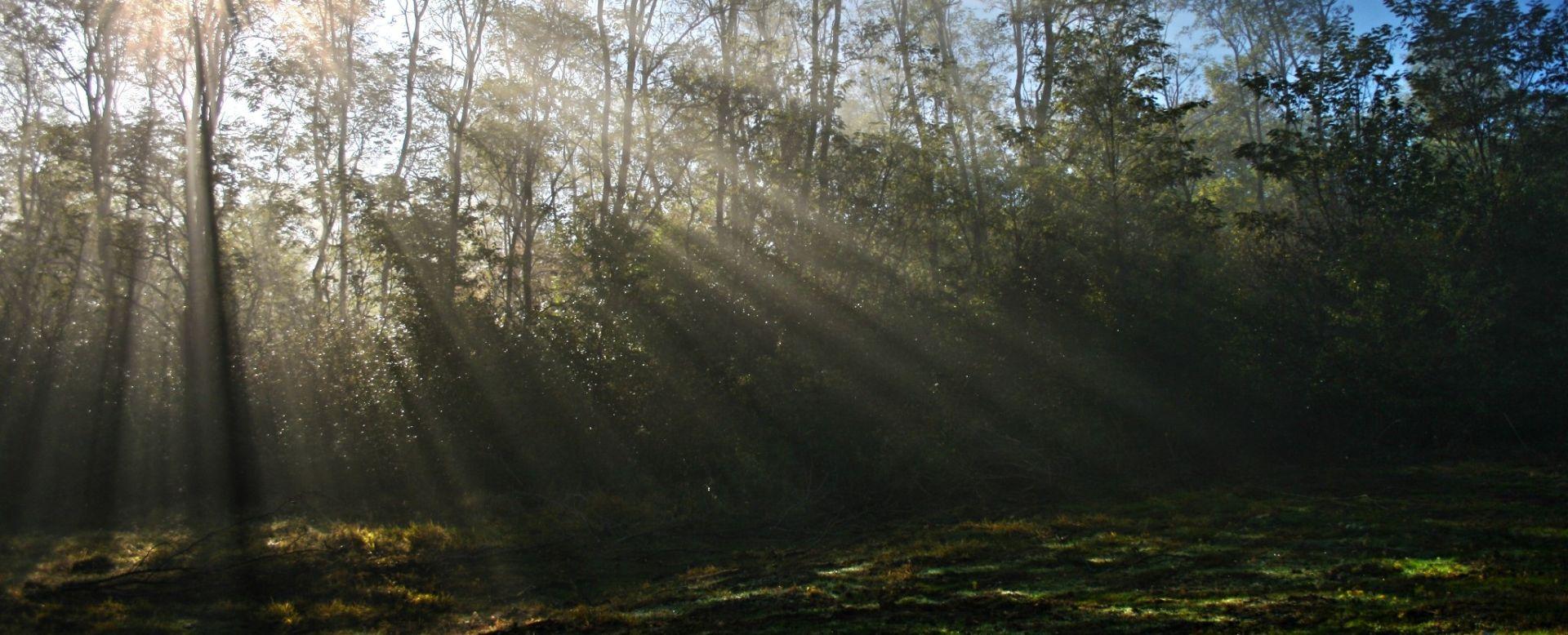 U SLAVONIJI DUGOTRAJNA MAGLA Pretežno sunčano, temperature do 17 u unutrašnjosti, do 21 na Jadranu