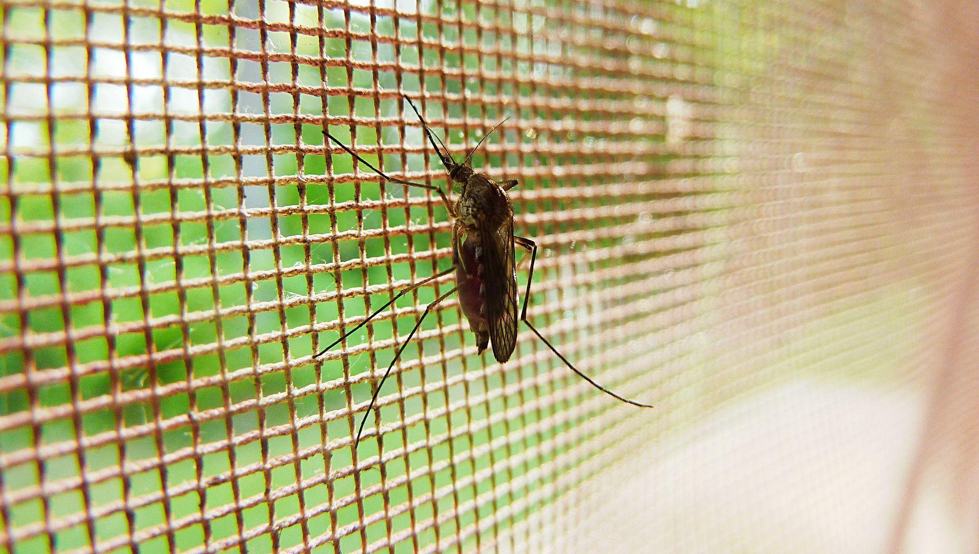 Američki znanstvenici uzgojili genetski modificiranog komarca otpornog na malariju