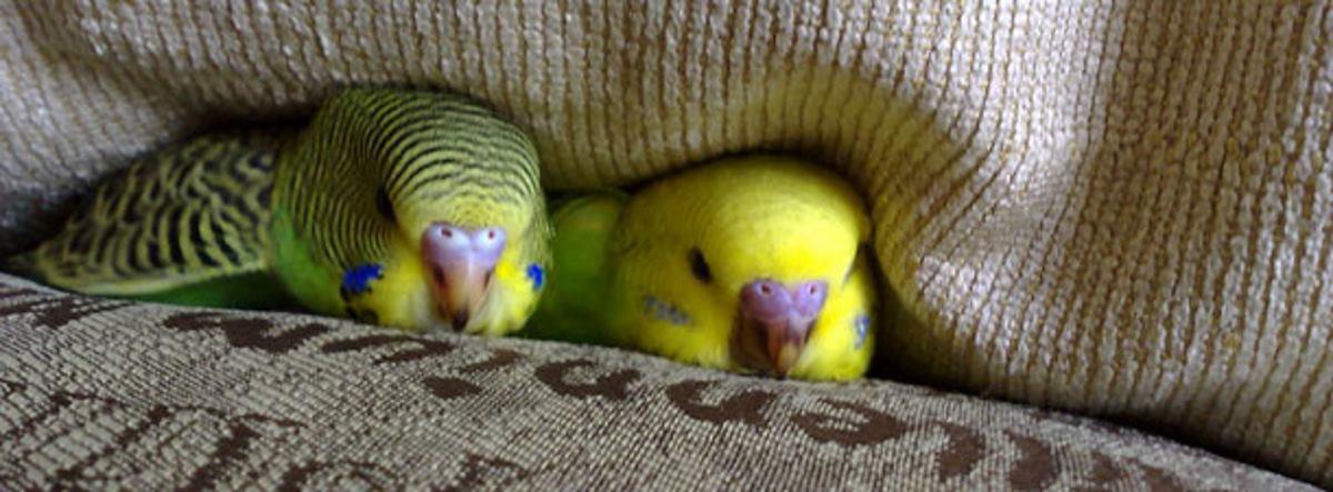 VIDEO: Zavirimo u zabavni svijet papigašica…