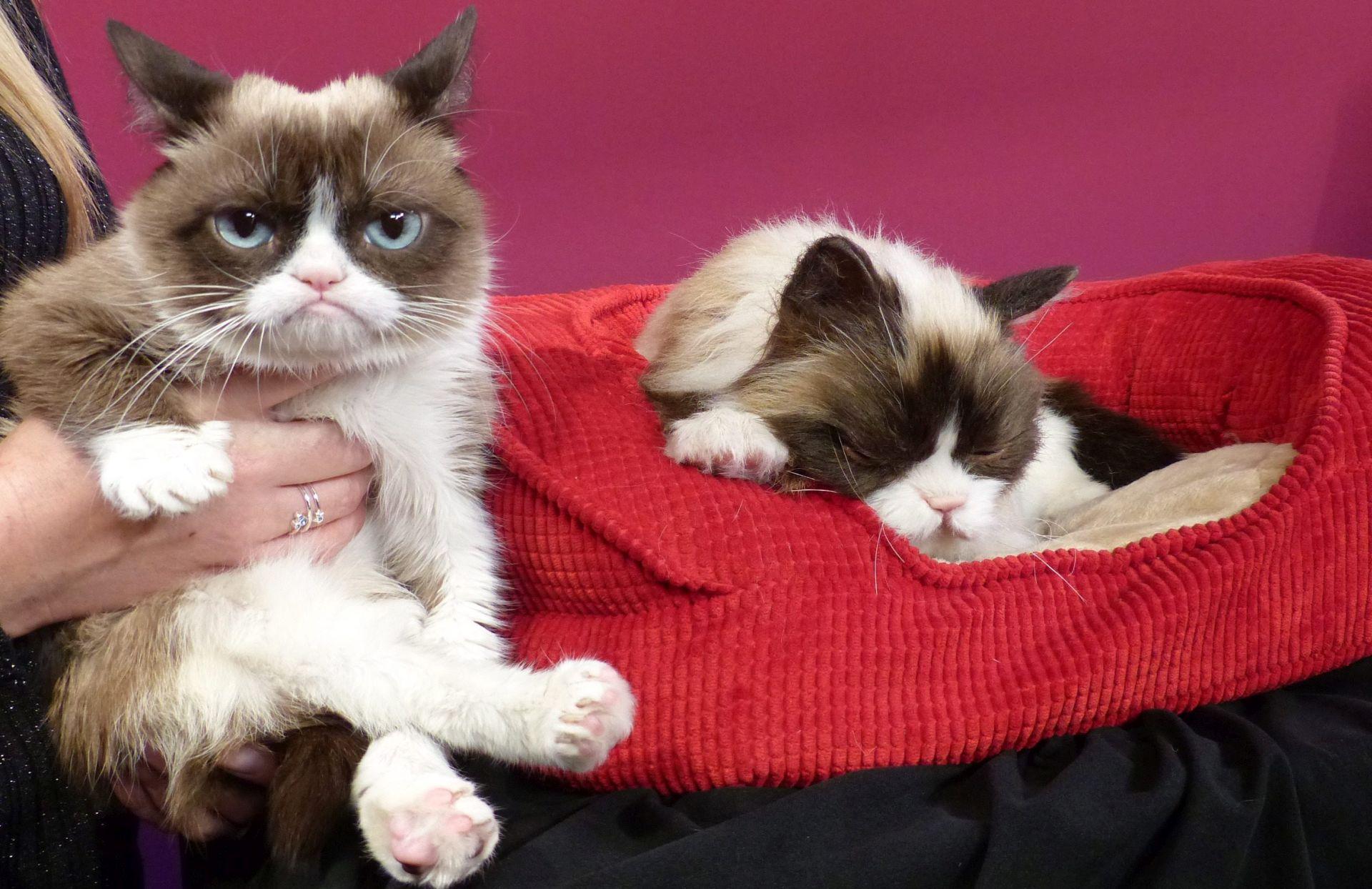 VIDEO: Slavna Grumpy Cat dobila dvojnika u Muzeju Madame Tussauds u San Franciscu
