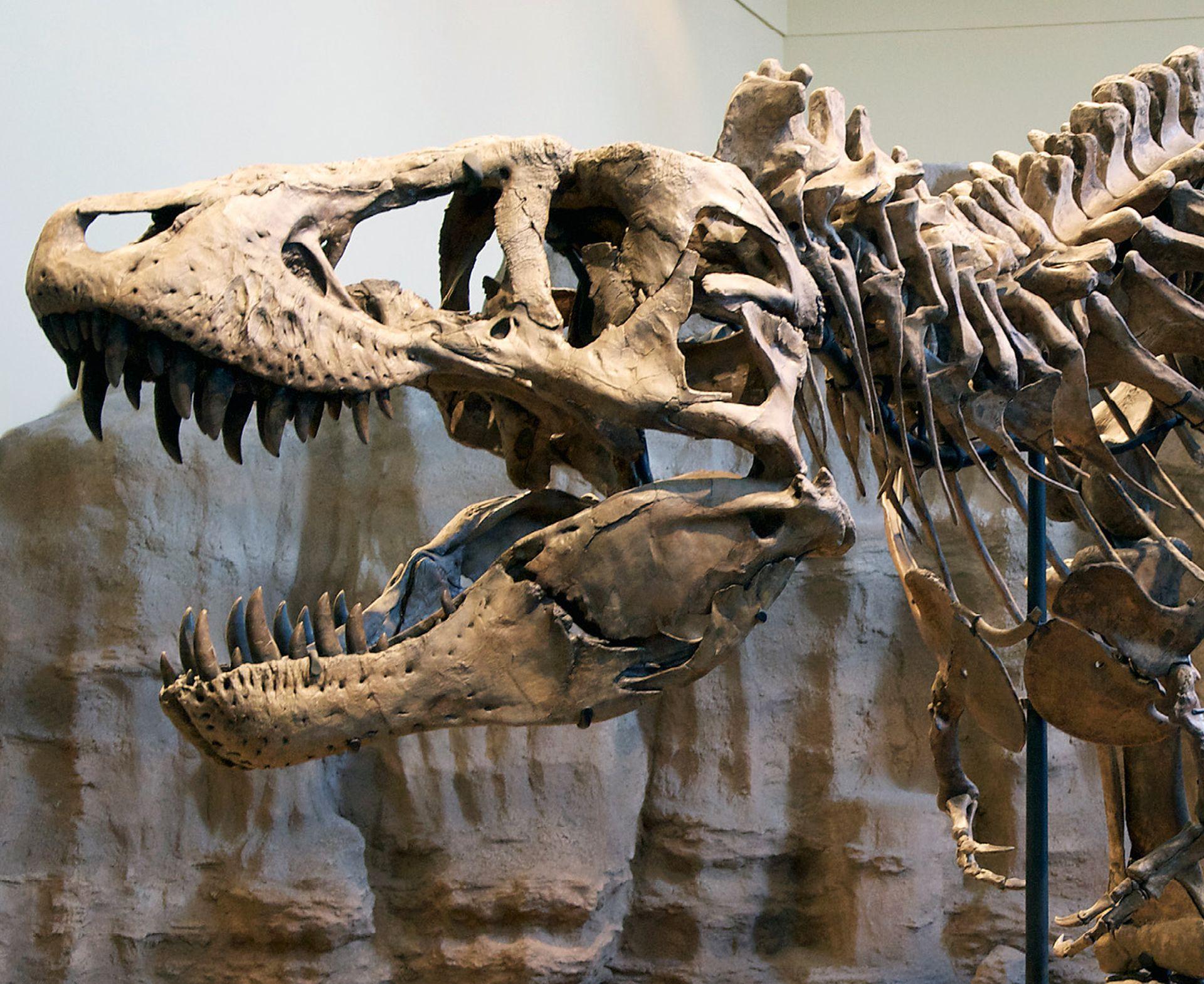 FELJTON Potraga za izgubljenim svijetom fosila