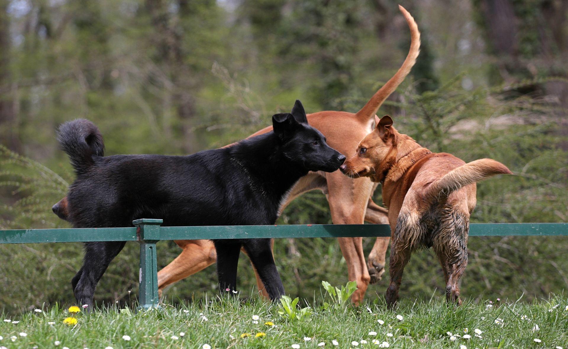 MEĐIMURSKA ŽUPANIJA: Oko 2500 nečipiranih i necijepljenih pasa