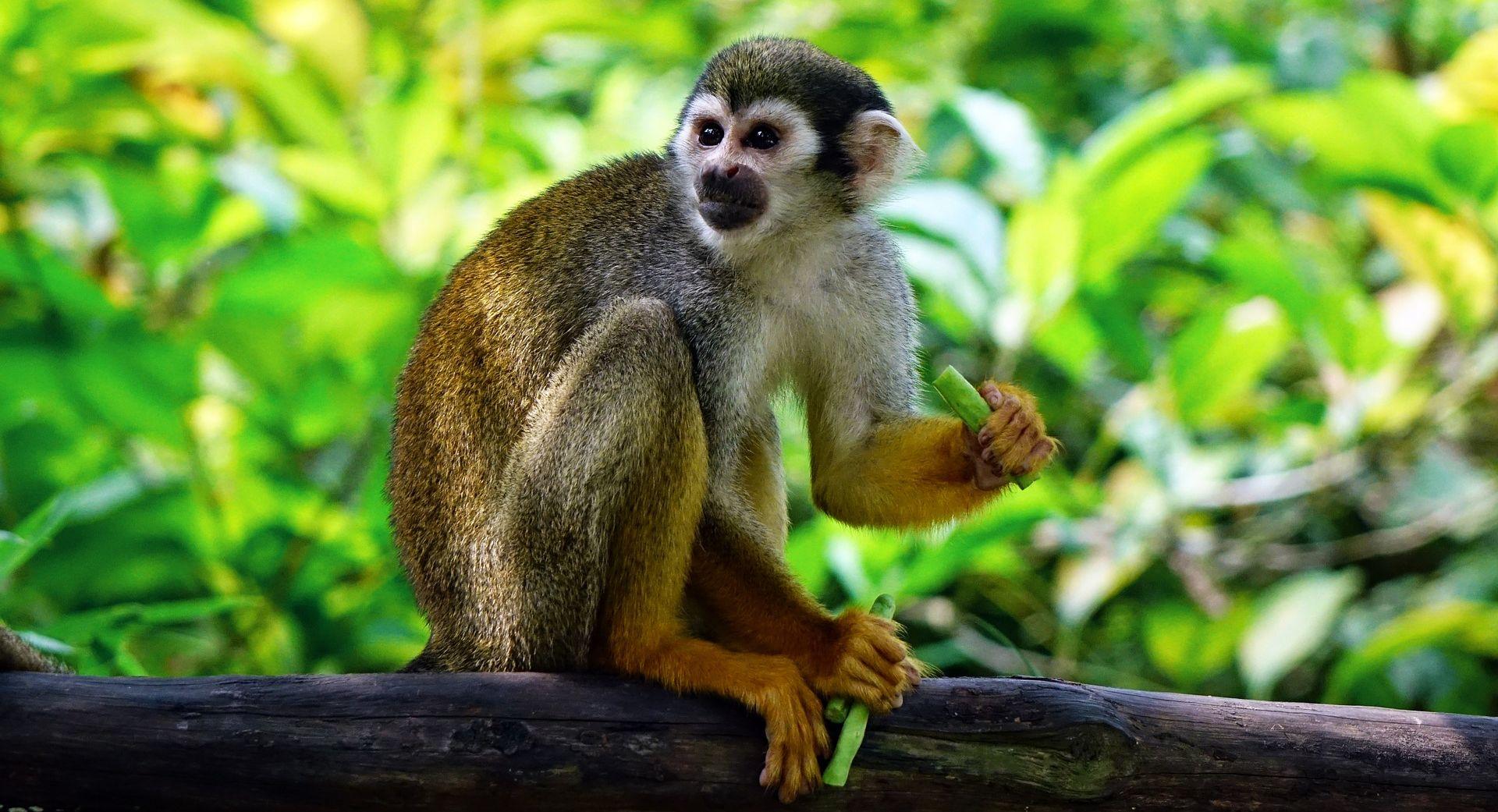 TRAŽE LIJEK ZA BOLEST Kineski znanstvenici 'proizveli' majmune s autizmom