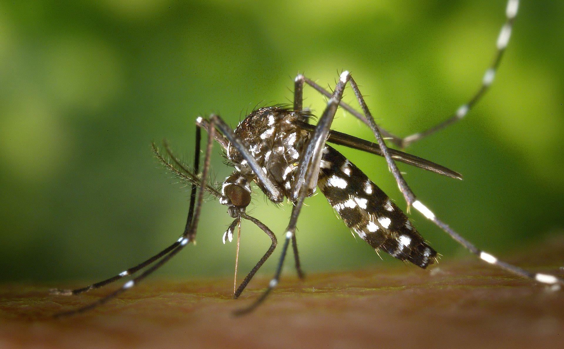 OPASNA BOLEST Epidemija virusom zika počela na Martiniqueu i u Gvajani