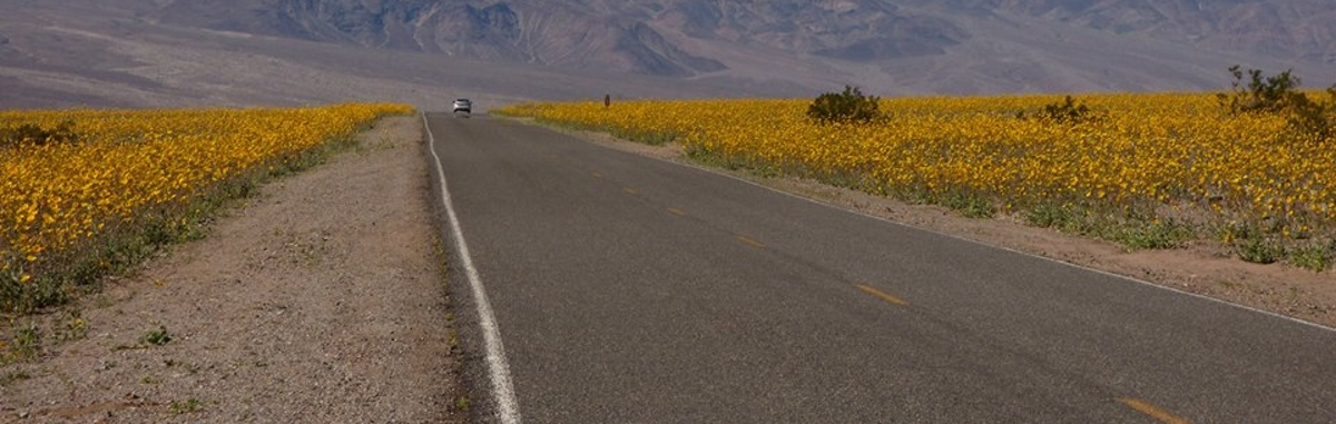 VIDEO: Kalifornijsku Dolinu smrti prekrilo pustinjsko cvijeće