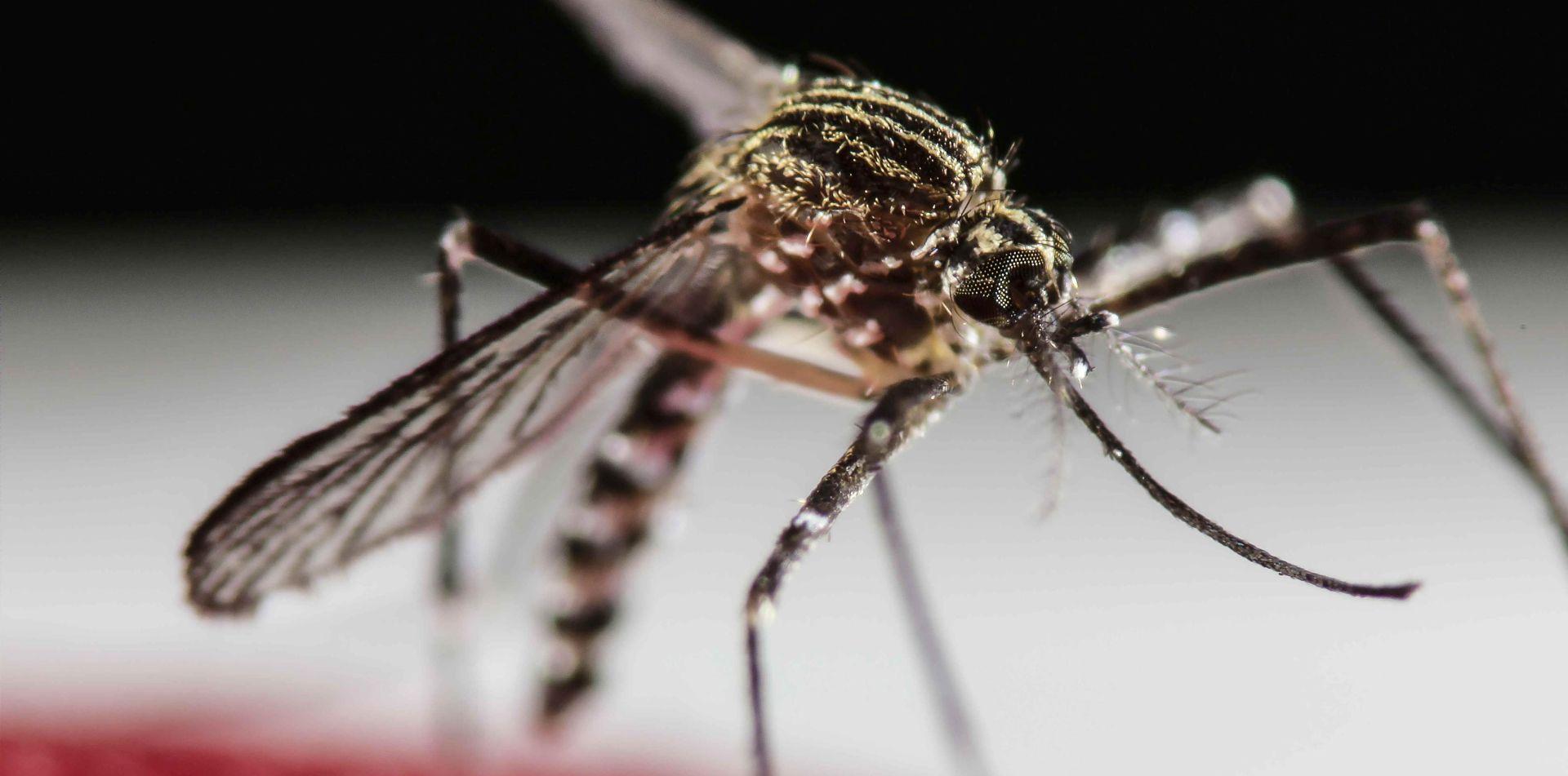 NOVO ISTRAŽIVANJE Zika bi mogla napasti i mozak odraslih osoba