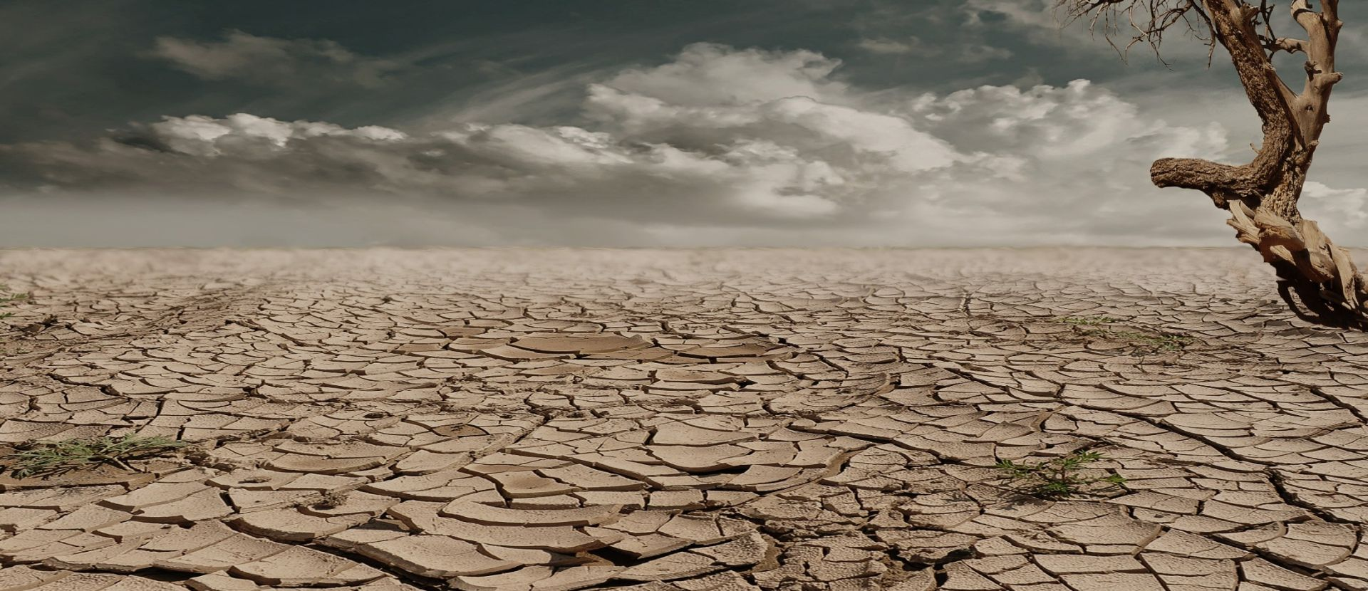 OZBILJNO UPOZORENJE UN-A Više od 50 tisuća somalijske djece moglo bi umrijeti zbog suše